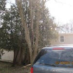 TreeRemoval02172012 003