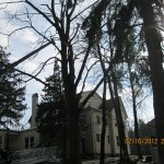 TreeRemoval02172012 005